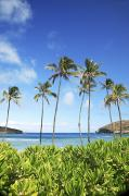 Crowd Scene Art - Hanauma Bay and Palms I by Brandon Tabiolo - Printscapes