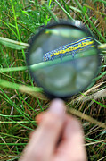 Yellow Insect Posters - Hand with magnifying glass looking at a worm on grass Poster by Sami Sarkis
