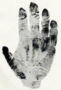 Black And White Hand Print Posters - Handprint Of Gorilla Poster by Sheila Terry