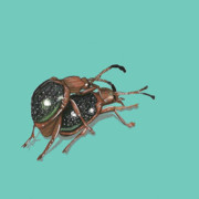 Bugs Paintings - Handsome Fungus Beetles by Jude Labuszewski