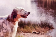 Black And White Photography Pyrography Metal Prints - Handsome Hunter. English Setter Metal Print by Jenny Rainbow