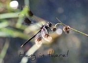 Get Well Soon Prints - Hang in There Card Print by Carol Groenen