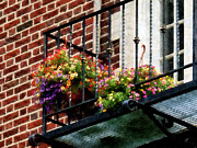 Bricks Prints - Hanging Basket on Fire Escape Print by Susan Savad