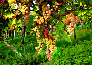Sparkling Wine Digital Art Prints - Hanging Grapes on the Vine Print by Elaine Plesser