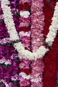 Arrange Posters - Hanging Hawaiian Leis Poster by Dana Edmunds - Printscapes