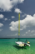Carribean Prints - Hanging in the air Print by Andriy Zolotoiy