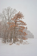Winter Storm Photos - Hanging On by Pamela Baker