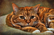 Ginger Cat Posters - Hanging Out Poster by Karen Slagle