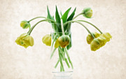 Colorful Floral Posters - Hanging Tulips Poster by Kristin Kreet