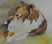 Collie Painting Framed Prints - Hanna the Collie Framed Print by Amy Householder