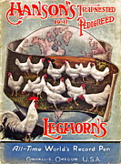 Pedigreed Posters - Hansons Leghorns Poster by Gwyn Newcombe