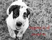Puppies Framed Prints - Happiness is all around me Framed Print by Amanda Barcon