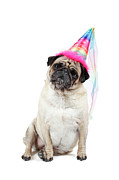 Party Hat Posters - Happy Birthday Poster by Mlorenzphotography