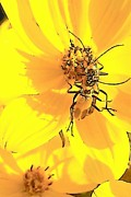Insects Digital Art Originals - Happy Dance by Wide Awake  Arts