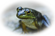 Aquatic Animal Framed Prints - Happy Green Frog Framed Print by Carolyn Marshall