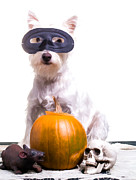 Pet Photo Prints - Happy Halloween Dog Print by Edward Fielding