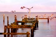 Pilings Photos - Happy Landings by Robert Lacy