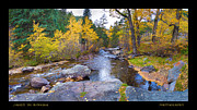Fall Photos Framed Prints - Happy Place in the Woods Panorama Poster  Framed Print by James Bo Insogna