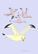 Flying Seagulls Digital Art Framed Prints - Happy Seagulls Framed Print by Fred Jinkins