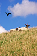 Dyke Posters - Happy Sheep Poster by Angela Doelling AD DESIGN Photo and PhotoArt