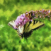 Blooms  Butterflies Framed Prints - Happy Swallowtail Butterfly Framed Print by Betsy Foster Breen