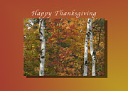 Fall Holiday Card Posters - Happy Thanksgiving Birch and Maple Trees Poster by Michael Peychich