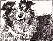 Collie Drawings Posters - Happy The Boarder Collie Poster by Michele Hollister - for Nancy Asbell