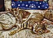 Cat Prints Digital Art Framed Prints - Happy Together Framed Print by David G Paul