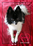 Cute Puppy Pictures Photos - Happy Valentines Day Card by John A Shiron
