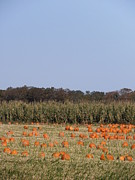 North Fork Prints - Harbes Farm Pumpkin Patch Print by Kimberly Perry