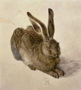 Watercolor  Paintings - Hare by Albrecht Durer