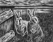 Bunny Drawings Prints - Hare Line  Print by Peter Piatt