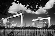 Cranes Photo Prints - Harland And Wolff Shipyard Cranes Belfast Print by Joe Fox