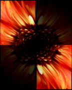 Orange Flower Digital Art Framed Prints - Harlequin Incandescence  Framed Print by Abigail Markov