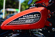 Harley Davidson Photos - Harley Davidson  883 Gas Tank by Paul Ward