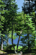 Blue Water Art - Harmony in Green and Blue - Manzanita Lake - Lassen Volcanic National Park CA by Christine Till