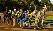 Horses In Harness Prints - Harness Racing 11 Print by Bob Christopher
