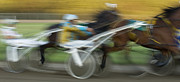 Horses In Harness Prints - Harness Racing 6 Print by Bob Christopher