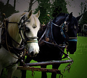 Horses Digital Art - Harnessed Knights  by Steven  Digman