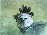 Eagle Metal Prints - Harpy Eagle Portrait Metal Print by Betty LaRue