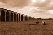 Graze Posters - Harringworth Viaduct and Horses Grazing Poster by Louise Heusinkveld