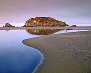 Harris Beach State Park Oregon Print by Tim Fitzharris