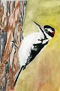 All Originals - Harry the Hairy Woodpecker by Rich Stedman