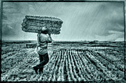 Bales Framed Prints - Harvest - 2 Framed Print by Okan YILMAZ