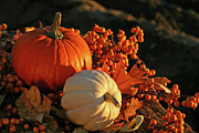 Gourds Prints - Harvest colors Print by Sandra Cunningham