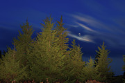 Bear Rocks Prints - Harvest Moon over Dolly Sods Print by Dan Carmichael