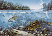 Jon Q Wright Posters - Harvest Moon Walleye II Poster by JQ Licensing