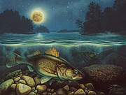 Lake Posters - Harvest Moon Walleye III Poster by JQ Licensing