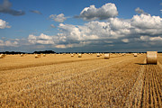 Oat Photos - Harvest by Ralf Kaiser