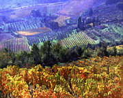 Impressionistic Wine Prints - Harvest Time at the Vineyard Print by Elaine Plesser